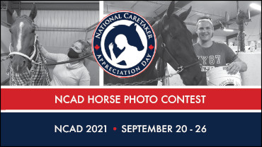 """Featured image for """"For The Love Of The Horse: NCAD Photo Contest"""""""