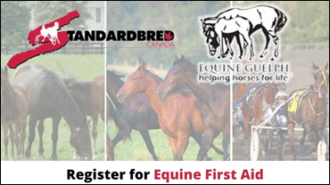 """Featured image for """"Registration For Equine First Aid Now Open"""""""